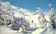 spo025603 - White Mountain Skiing Postcard Post Card Old Vintage Antique