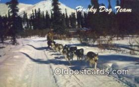 Alaska Husky Dog Team, AK USA