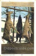spo033077 - Adirondacks, Sports, Gun, Rifle, Hunting Postcard Postcards