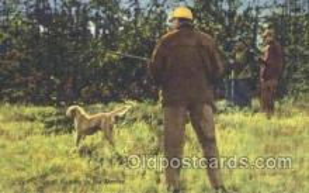 spo033192 - Bobwhite Quail, Hunting Postcard Postcards