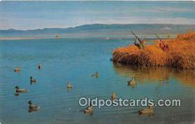 spo033288 - Hunting Postcard