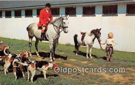 spo033302 - Hunting Postcard