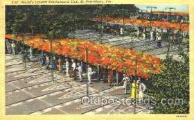 spo041015 - St. Petersburg, Shuffle Board, Shuffleboard, Postcard Postcards
