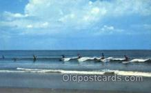 spo045134 - North Carolina, USA, Ocean Surfing Postcard Postcards