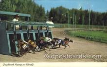 spo046008 - Greyhound Racing in Florida Dog Racing Postcard Postcards
