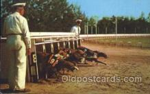 spo046010 - Greyhound Racing in Florida Dog Racing Postcard Postcards