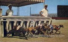 spo046019 - Datona Beach, Florida USA Dog Racing Postcard Post Cards