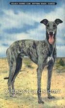spo046023 - Volusia Kennel Club, Daytona Beach, FL USA Dog Racing, Old Vintage Antique Postcard Post Card