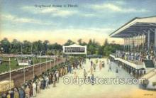 spo046026 - Greyhounds, FL USA Dog Racing, Old Vintage Antique Postcard Post Card
