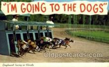 spo046027 - Greyhounds, FL USA Dog Racing, Old Vintage Antique Postcard Post Card