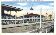 spo046029 - St Petersburg, FL USA Dog Racing, Old Vintage Antique Postcard Post Card