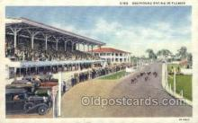spo046031 - Greyhounds, FL USA Dog Racing, Old Vintage Antique Postcard Post Card