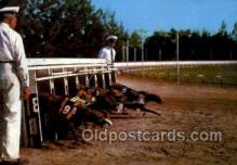 spo046039 - Greyhounds, FL USA Dog Racing, Old Vintage Antique Postcard Post Card