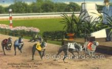spo046067 - Greyhounds, FL USA Dog Racing, Old Vintage Antique Postcard Post Card