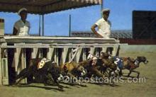 spo046073 - Daytona Beach Kennel Club, Daytona Beach, FL USA Dog Racing, Old Vintage Antique Postcard Post Card