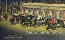 spo046079 - Greyhounds, FL USA Dog Racing, Old Vintage Antique Postcard Post Card