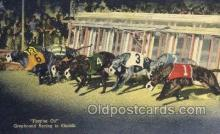 spo046080 - Greyhounds, FL USA Dog Racing, Old Vintage Antique Postcard Post Card