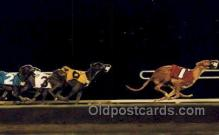 Racing Greyhounds, AZ USA