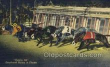 spo046085 - Greyhounds, FL USA Dog Racing, Old Vintage Antique Postcard Post Card