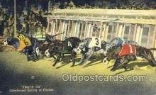 spo046086 - Greyhounds, FL USA Dog Racing, Old Vintage Antique Postcard Post Card