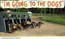 spo046087 - Greyhounds, FL USA Dog Racing, Old Vintage Antique Postcard Post Card