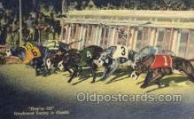 spo046088 - Greyhounds, FL USA Dog Racing, Old Vintage Antique Postcard Post Card