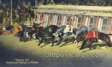 spo046089 - Greyhounds, FL USA Dog Racing, Old Vintage Antique Postcard Post Card