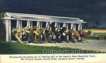 spo046091 - Volusia Kennel Club, Daytona Beach, FL USA Dog Racing, Old Vintage Antique Postcard Post Card