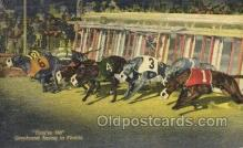 spo046098 - Greyhounds, FL USA Dog Racing, Old Vintage Antique Postcard Post Card