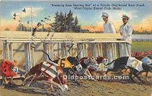 Breaking from Starting Box, Florida Greyhound Race Track