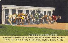 Greyhounds breaking out of starting box, Volusia County Kennel Club