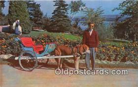 Attelage De Chien, Dog Carriage