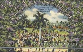 spo050026 - Walking Ring Between Races at Hialeah Park, Miami Beach Florida, USA