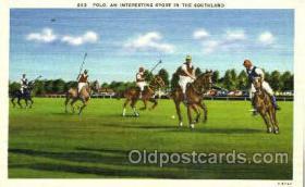 spo051013 - Polo in Southland, Postcard Postcards