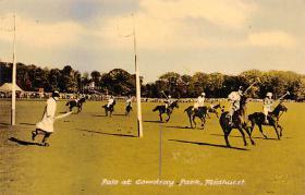 spof019003 - Polo at Cowdray Park, Midhurst, United Kingdom Polo Postcard