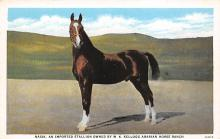 spof021002 - Nasik, an imported Stallion Owned by W.K. Kellogg Arabian Horse Ranch, Horse Racing, Trotters,  Postcard