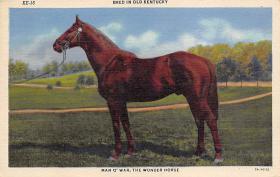 spof021005 - Man O' War, Horse Racing, Trotters,  Postcard