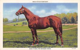 spof021083 - Man 'O War The Wonder Horse Horse Racing Trotter, Postcard