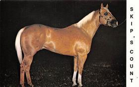 spof021090 - Skip's Count Horse Racing Trotter, Postcard