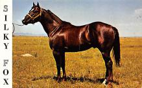 spof021091 - Silky Fox Horse Racing Trotter, Postcard