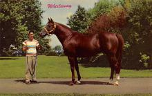 spof021096 - Whirlaway Louisville, KY, USA Horse Racing Trotter, Postcard