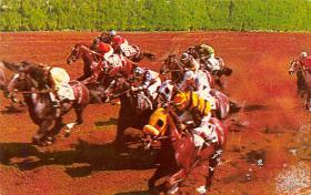 spof021407 - Hialeah Park, Florda USA Horse Racing, Trotters, Postcard