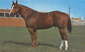 spof021445 - Wallaby, Worlds Champion Halter Stallion 1967, Grand Champion Stallion at 1969, Horse Racing, Trotters, Postcard