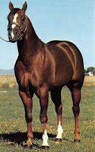 spof021475 - Beau Bonanza, Horse Racing, Trotters, Postcard