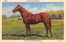spof021478 - Man-0-War, The Wonder Horse, Horse Racing, Trotters, Postcard