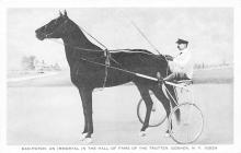 spof021486 - Dan Patch, Trotter Goshen NY USA Horse Racing, Trotter, Trotters, Postcard