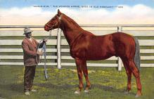 spof021509 - The Wonder Horse Horse Racing, Trotter, Trotters, Postcard