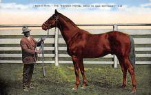 spof021514 - The Wonder Horse Horse Racing, Trotter, Trotters, Postcard