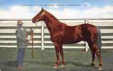 spof021519 - The Wonder Horse Horse Racing, Trotter, Trotters, Postcard