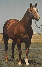 spof021531 - Shasta Scooter#48212 Horse Racing Postcard